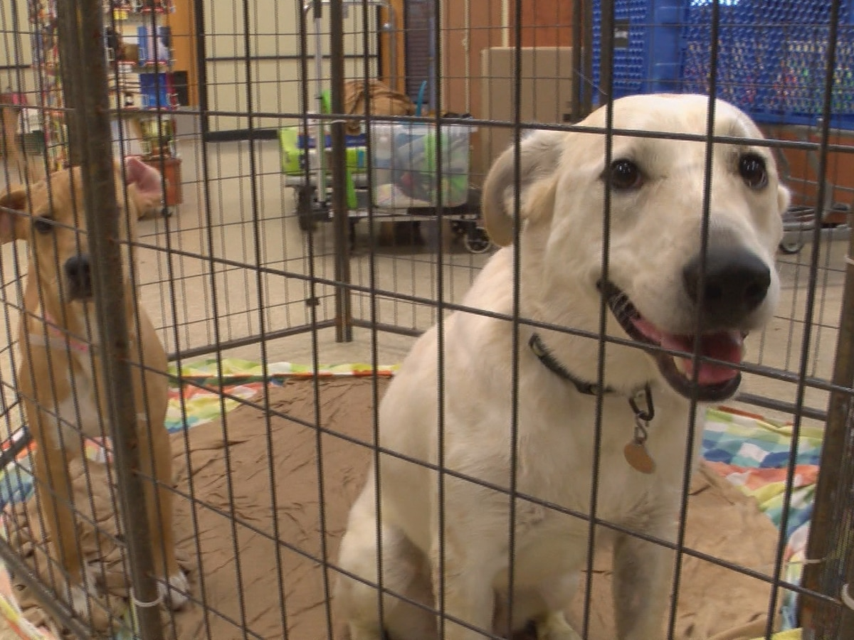 PetSmart, Southern Pines hosting quarterly National Adoption Weekend