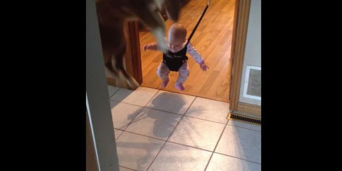 VIDEO: Dog teaches baby how to jump
