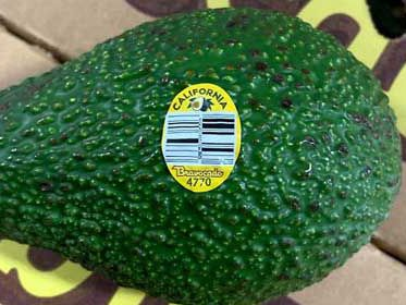 California grower recalls avocados over possible listeria
