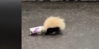 Officer praised after saving skunk stuck in cup