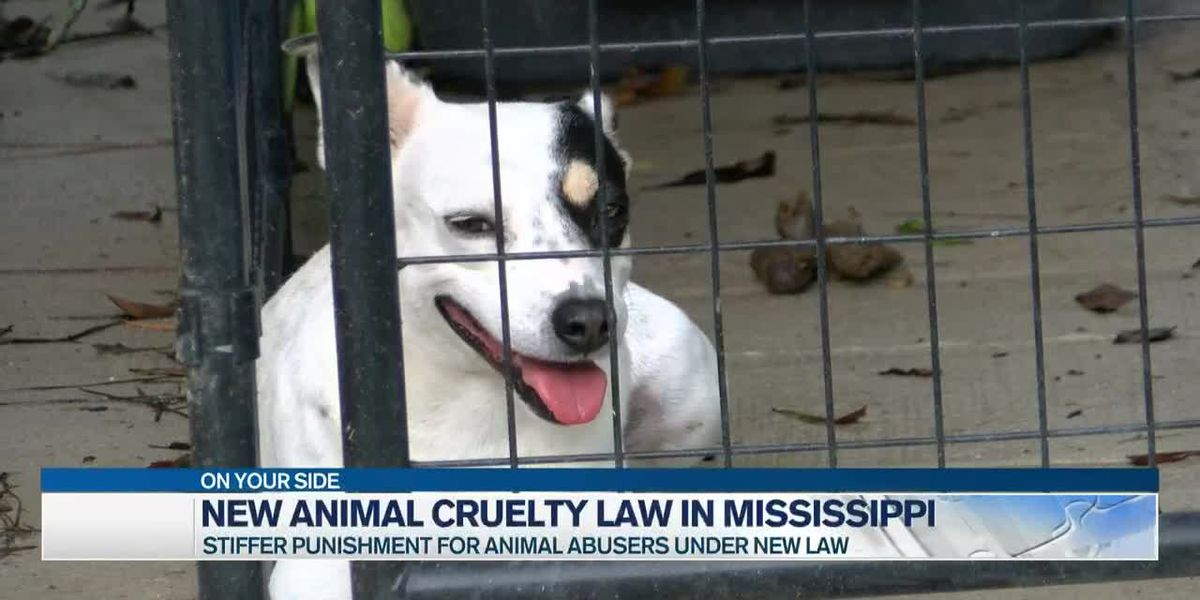 Mississippi is cracking down on animal cruelty with new law