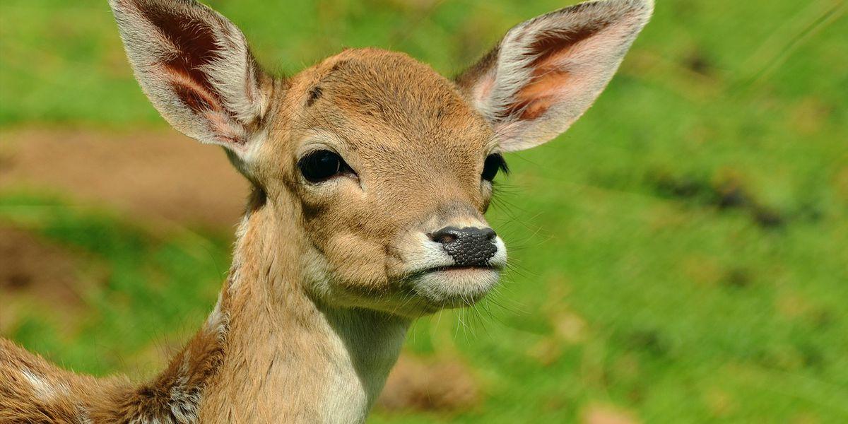 Chronic Wasting Disease remains into 2019-2020 hunting season