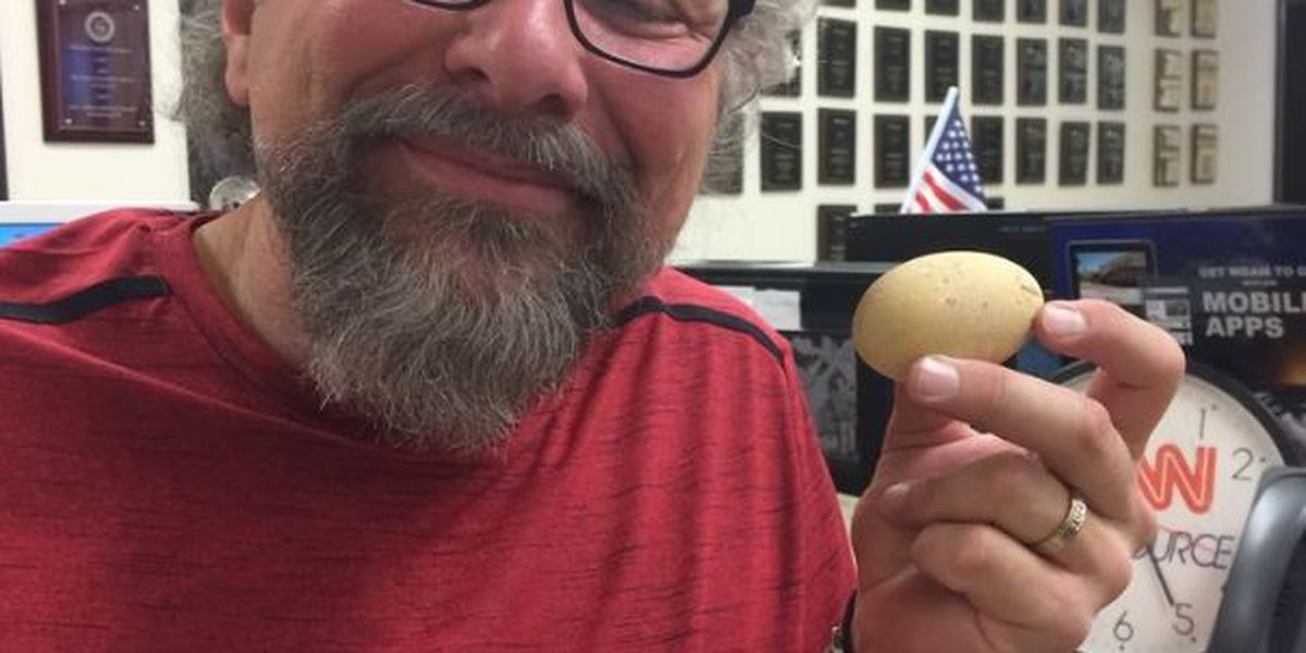 Goats lead WDAM reporter to a 'magical egg'