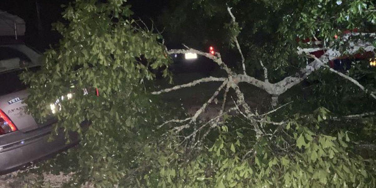 PHOTOS: April 23 storm damage in the Pine Belt