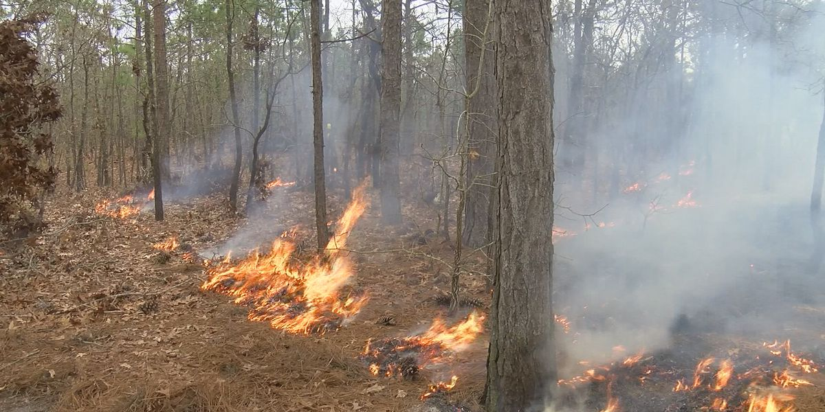Jones County prescribed burn Tuesday to cover more than 1,300 acres