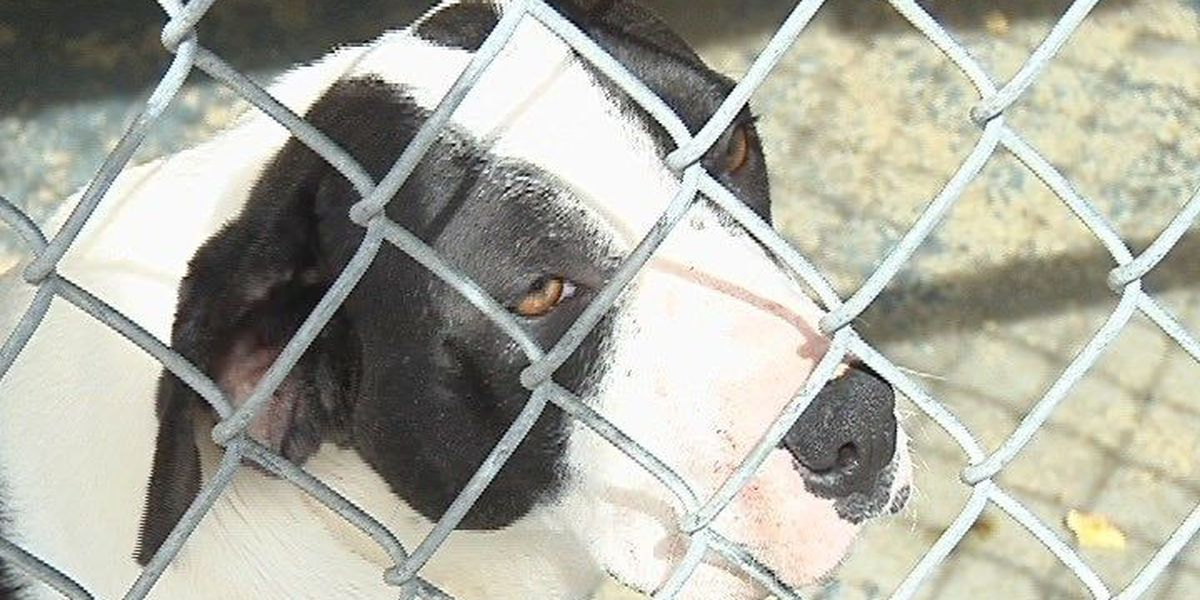 """Local animal shelters participate in """"Be My Valentine"""" pet adoption weekend"""