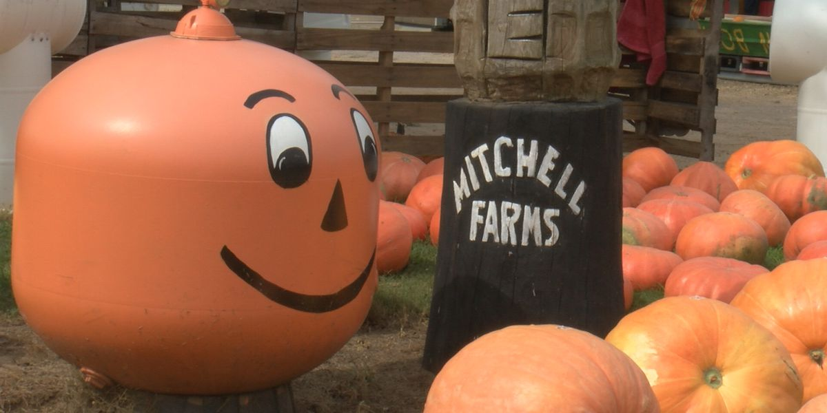 Mitchell Farms prepare to welcome back guests