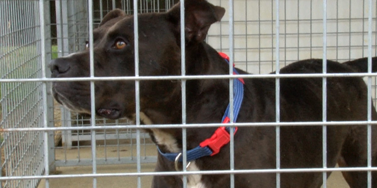 Laurel animal shelter trying to recover from COVID-19 impact