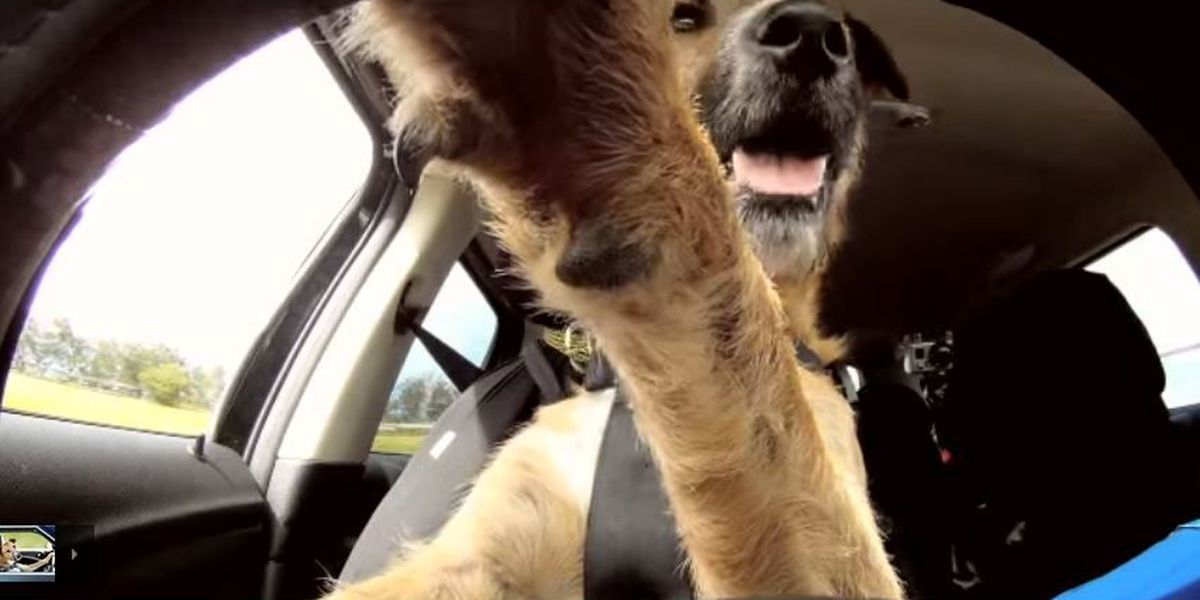 VIDEO: The World's First Driving Dog