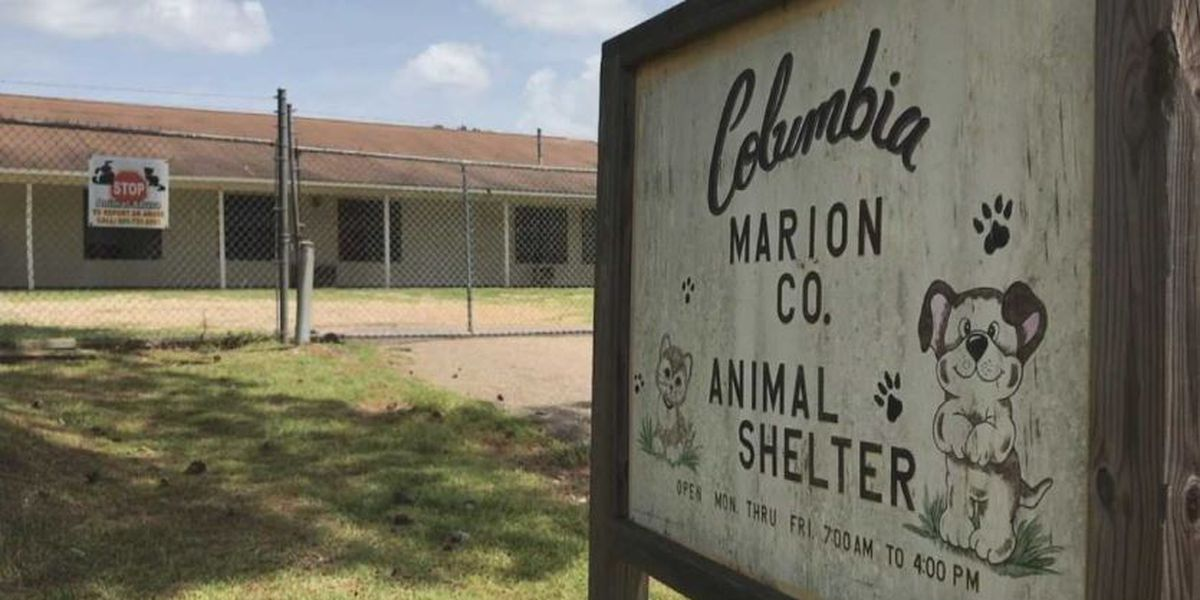 Columbia-Marion County Animal Shelter calling for volunteers