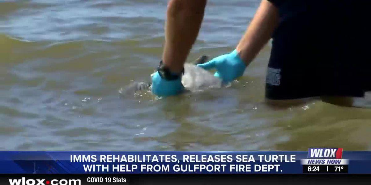 IMMS, Gulfport Fire release rehabilitated sea turtle 'Tiny Tom'