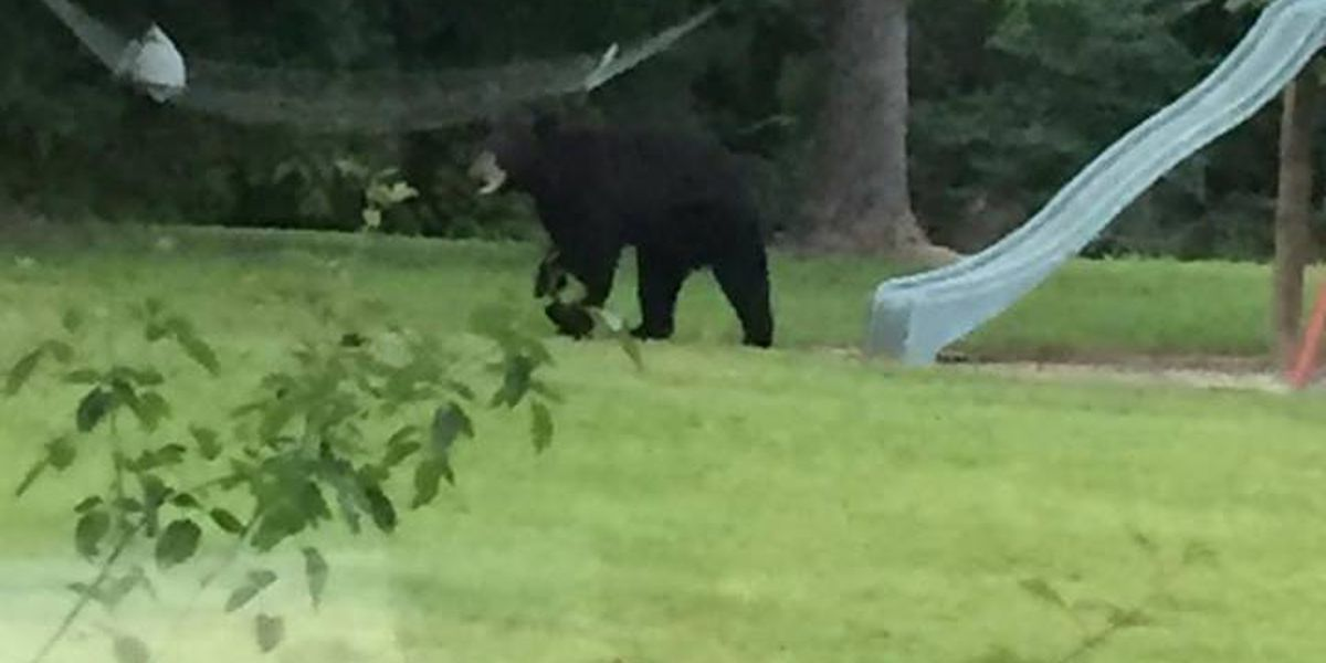 Officials: Bear sightings common in South MS