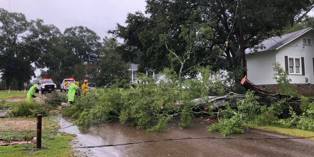 Crews in Collins clean up downed tree, power lines during Sunday's storms
