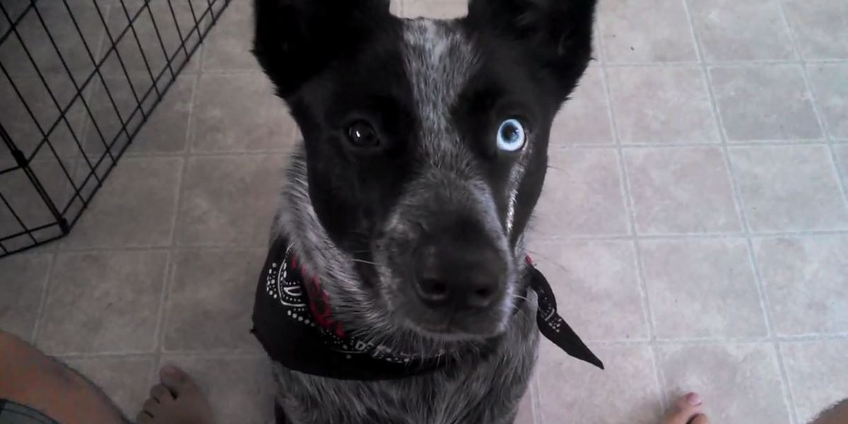 VIDEO: Dog lends a paw to parched owner