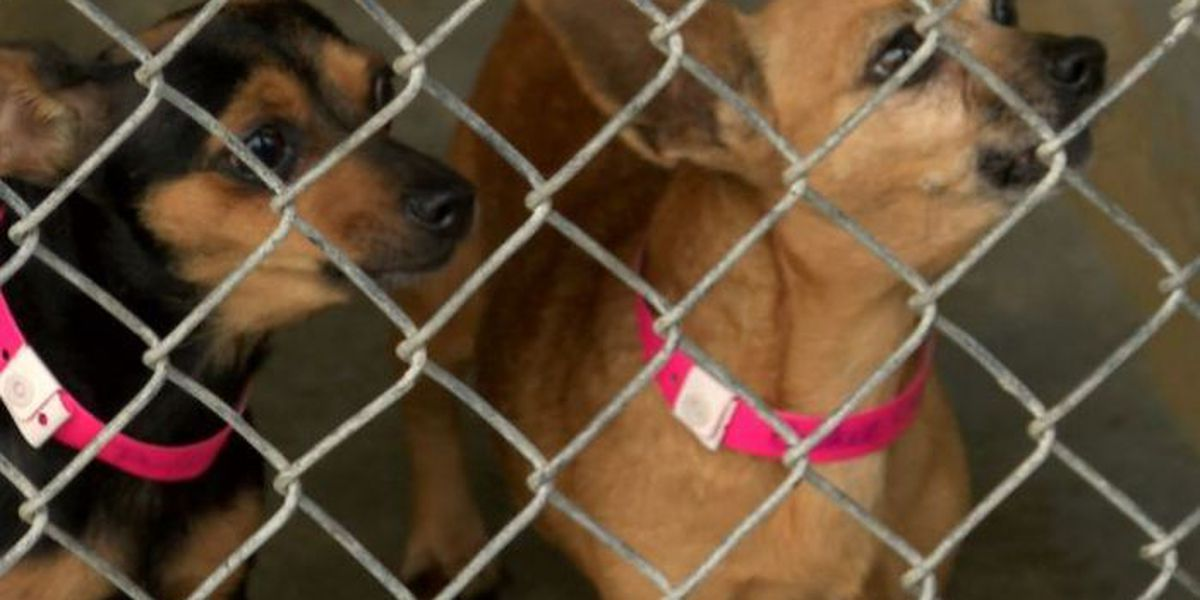 Southern Pines Animal Shelter sees more structural damages