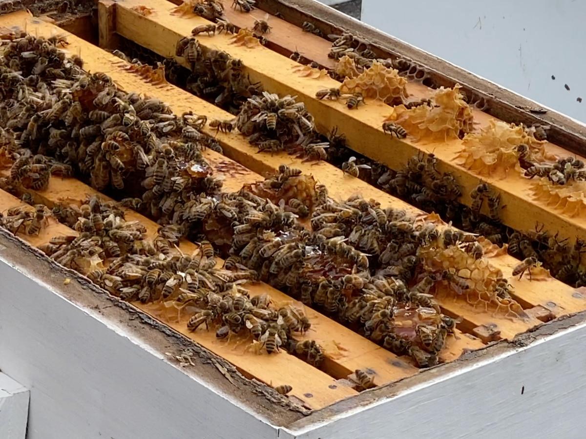 Smith's Honey Farm celebrating 20 years of business