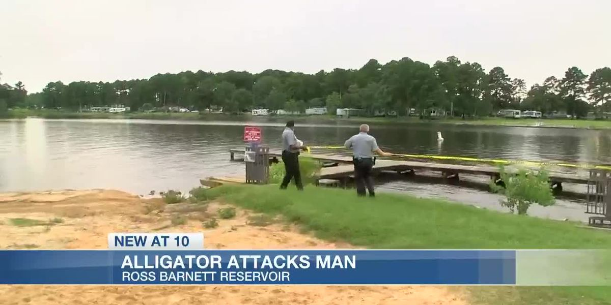 Man suffers minor injuries in 'incidental contact' with Alligator