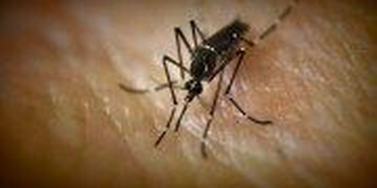 The cost of being prepared: Pine Belt leader's fight against mosquitoes