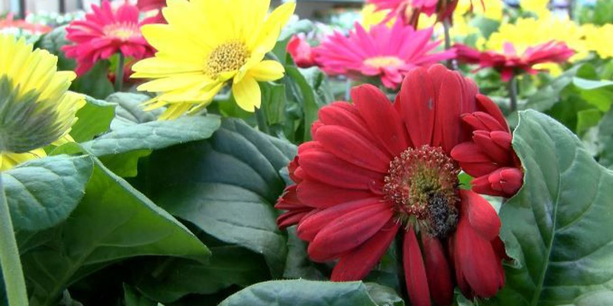 Tips for protecting spring plants from the cold