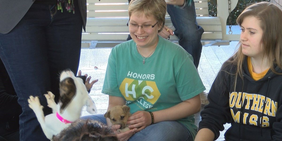 Local animal shelter brings puppies during finals week at USM