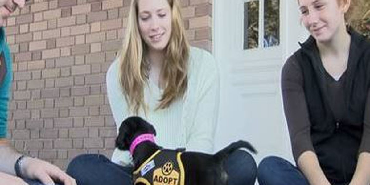 Therapy dogs make USM final exams less 'ruff'