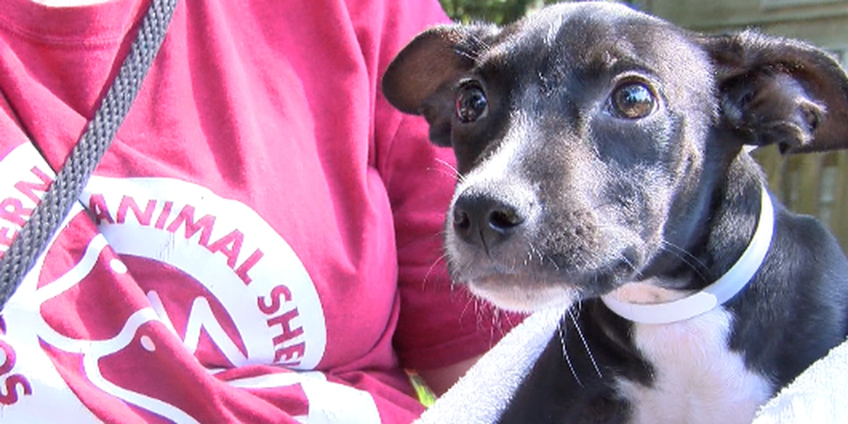Adoption fees waived at Southern Pines this weekend
