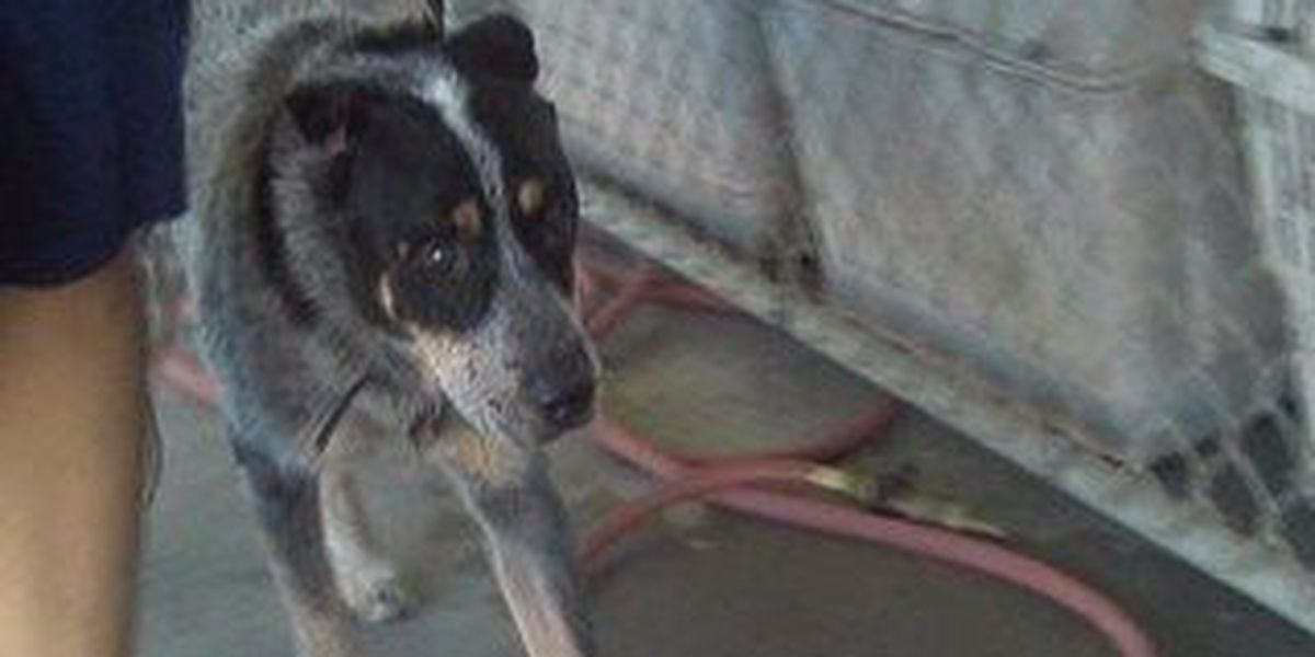 Pearl River County SPCA stretched to the limit following seizure of over 70 dogs