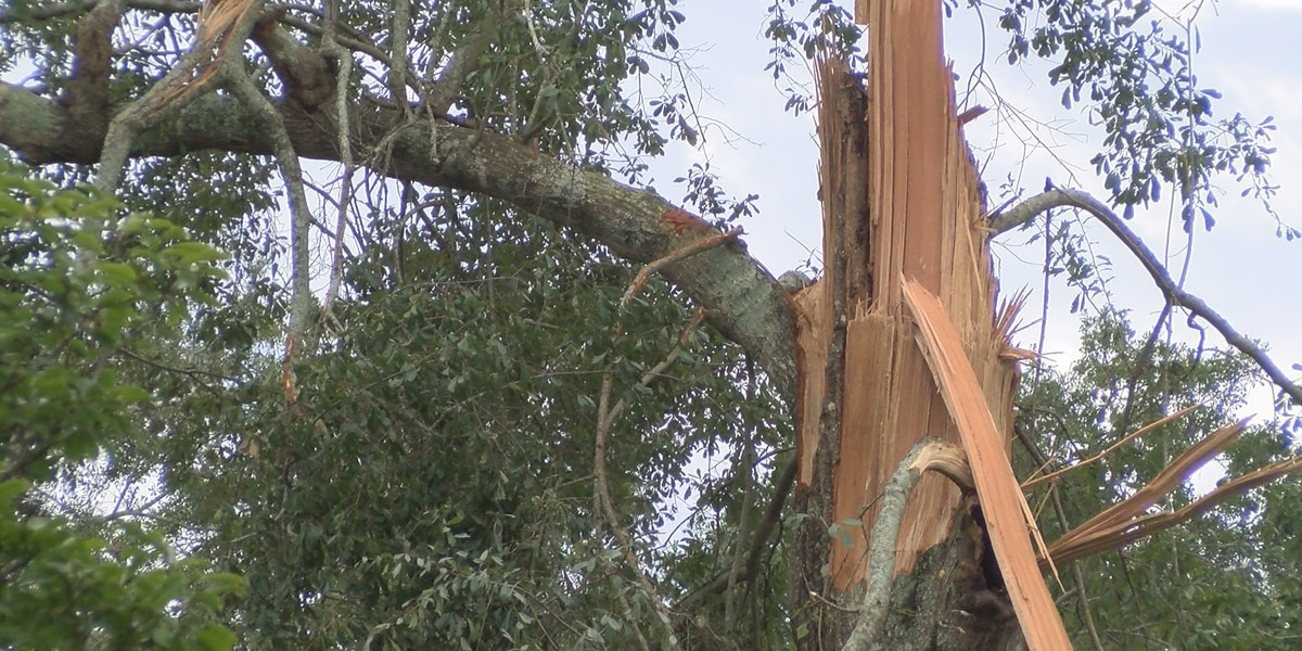 Residents report damage from Gordon