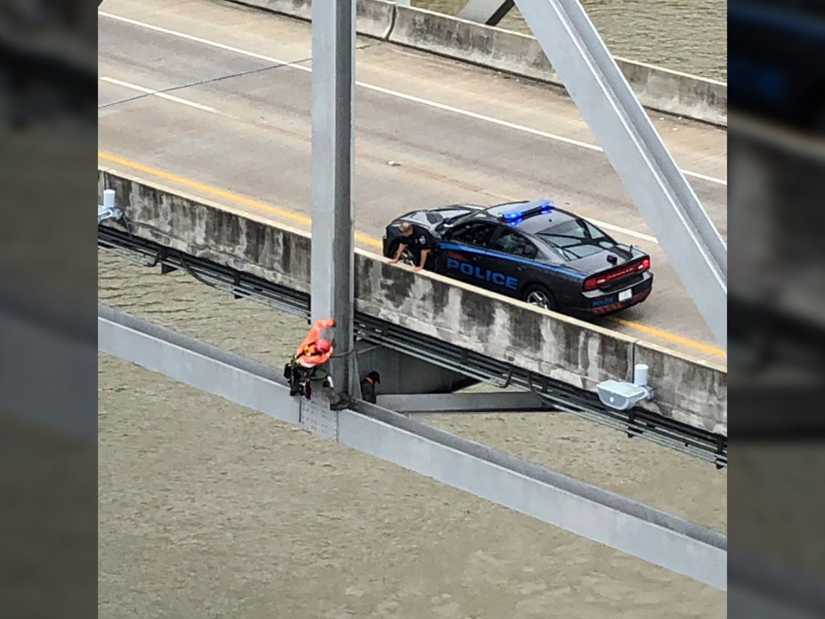 WATCH: Stranded dog rescued from bridge over the Mississippi River