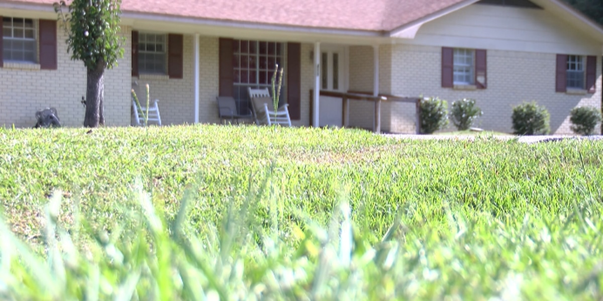 WDAM Investigation: Balancing care and safety in Petal neighborhood
