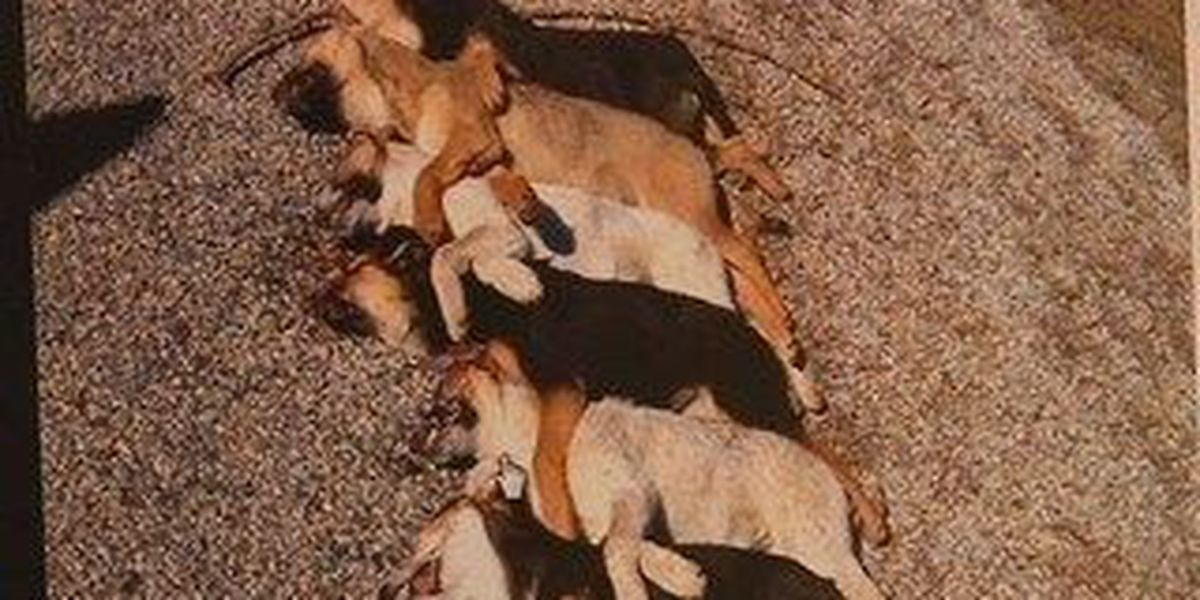Outrage among many over Wayne County shooting death of six dogs