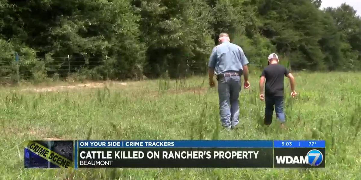 Cattle killed on rancher's property in Beaumont