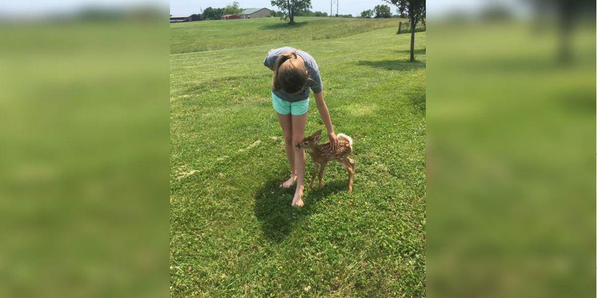 Cuteness alert: Deer, dog and daughter play in a field