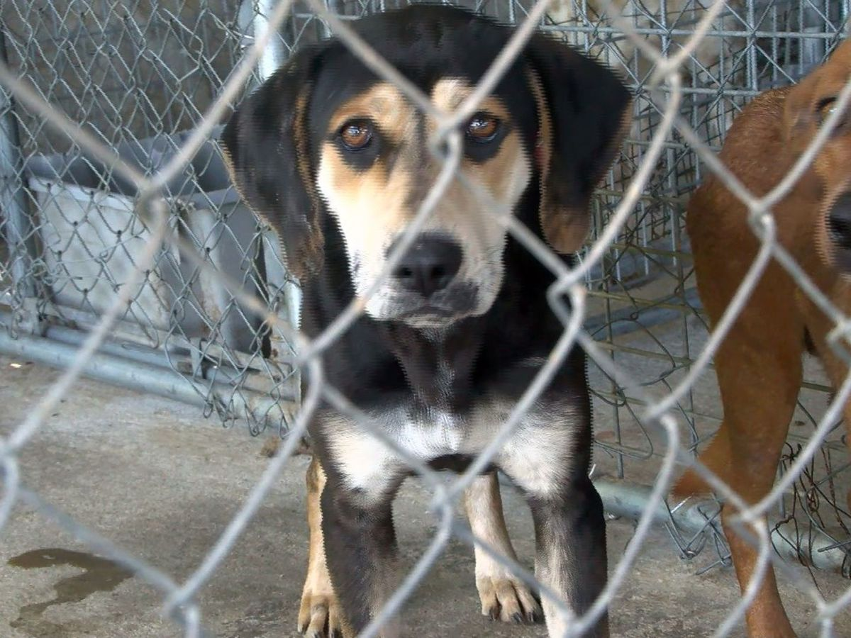 Animal rescue meets with Wayne County supervisors concerning support