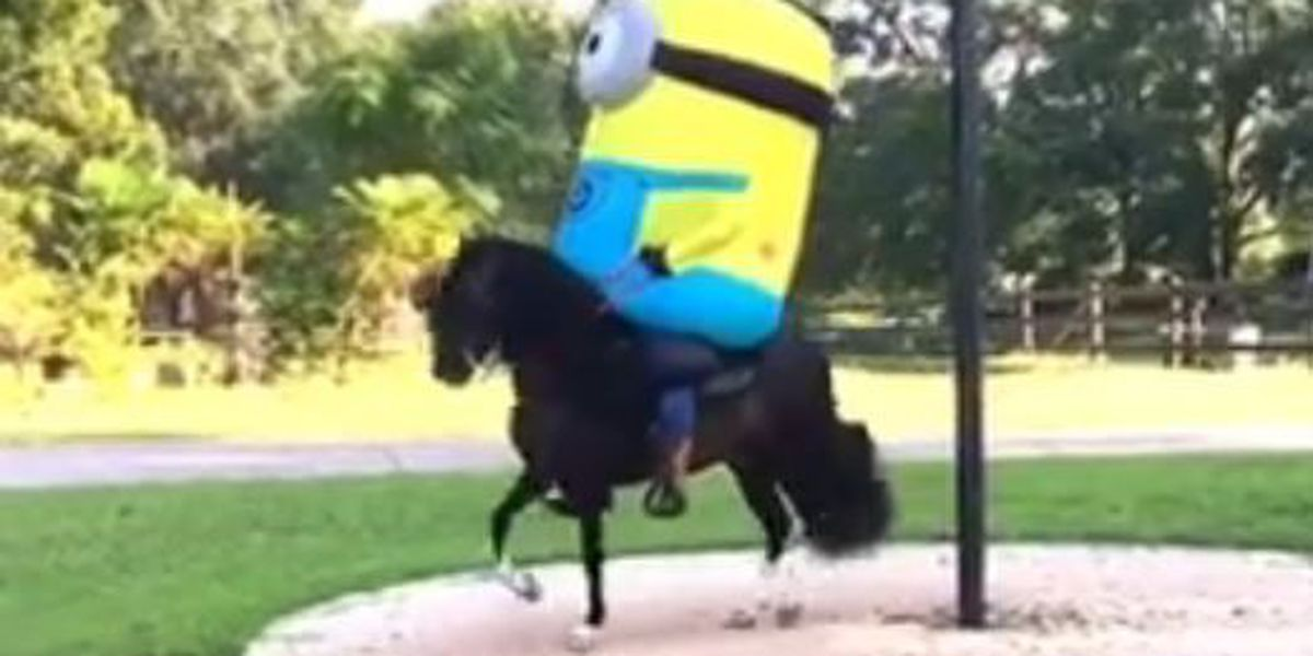 MS man sports minion costume while riding horse