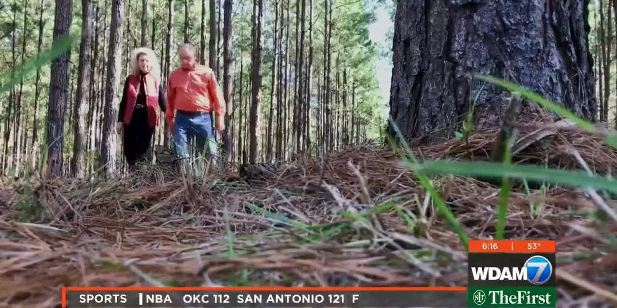 Lamar County couple recognized as Miss. Tree Farmers of the Year