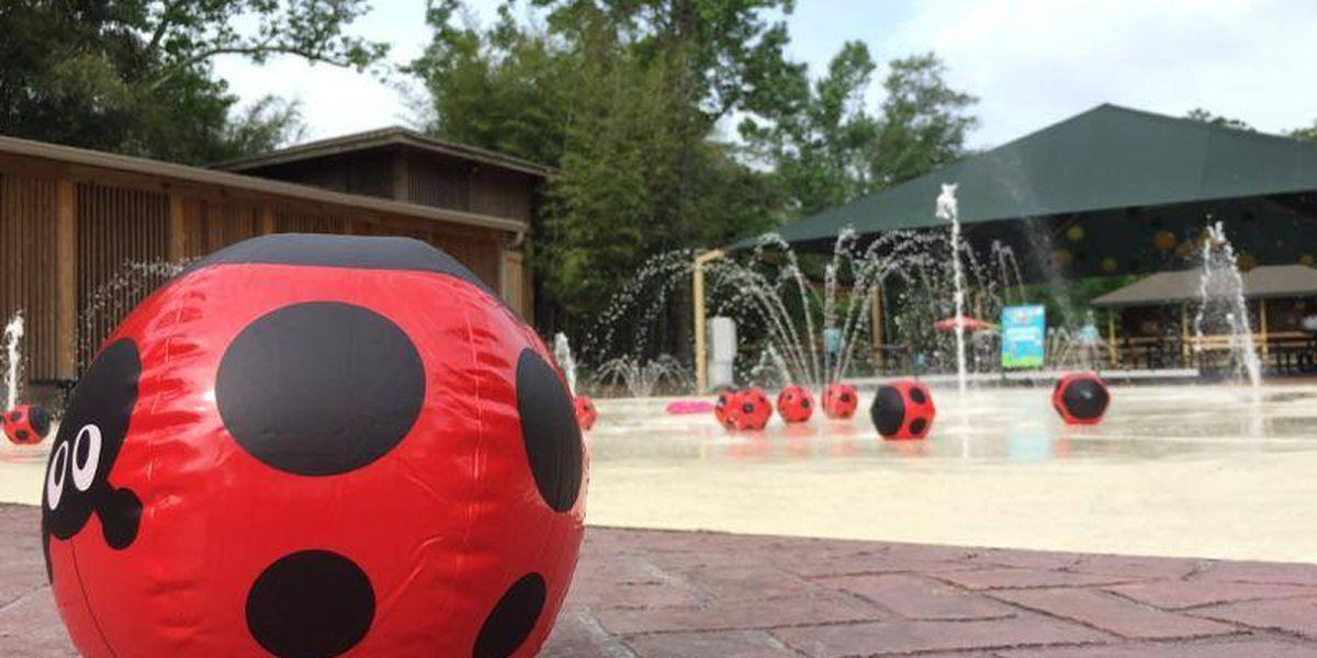 Hattiesburg Zoo announces summer camps