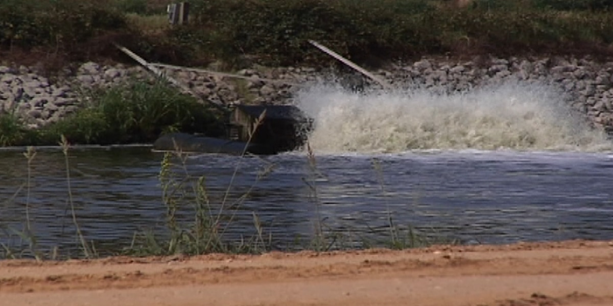 Hattiesburg heading back to federal court over wastewater regulations