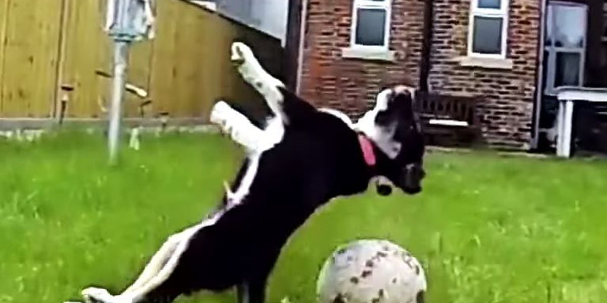 VIDEO: Dog fetch fails