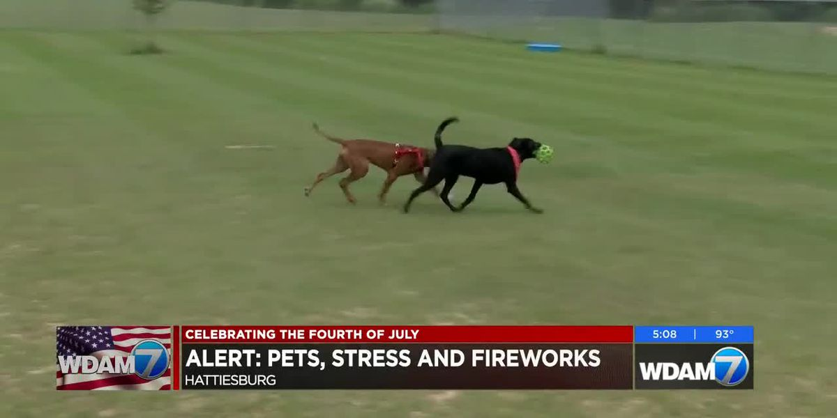Dogs fearful of Fourth of July fireworks