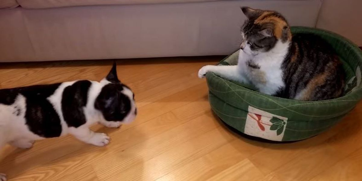 VIDEO: Puppy and Kitty have standoff