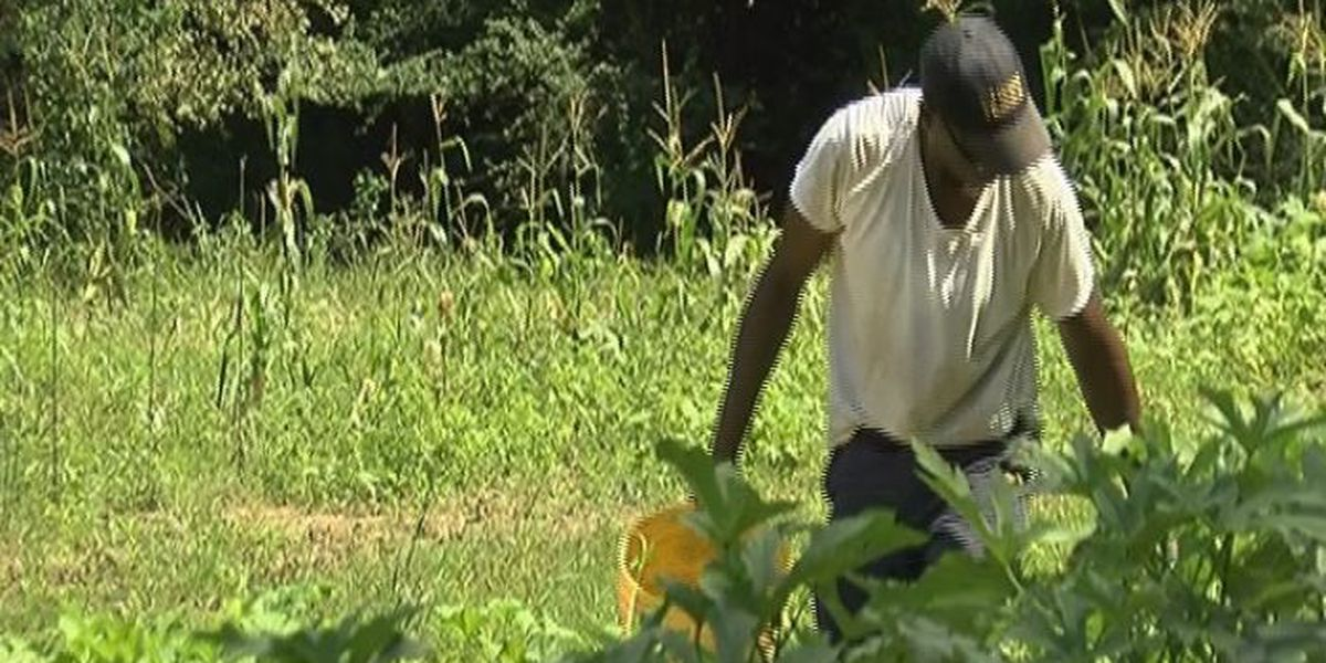 Palmers Crossing garden grows community by growing vegetables