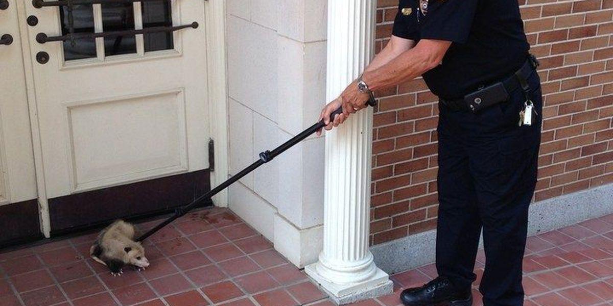 Pesky varmint prevents USM administrators from accessing building