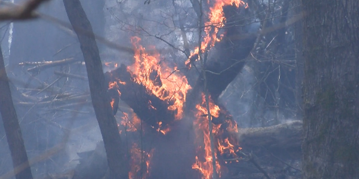 Forest burn to cover nearly 3,000 acres in Wayne and Jones counties