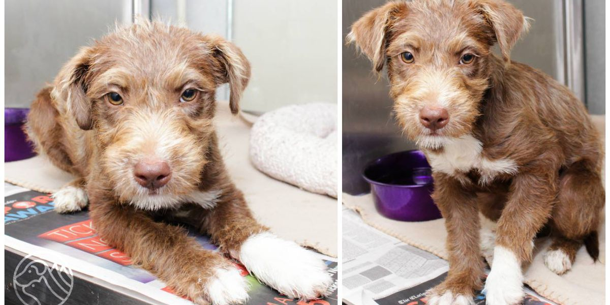 Community comes together to help puppy with broken leg