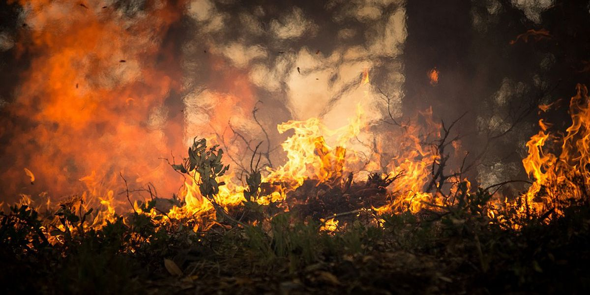 Prescribed burn set for southern Wayne County