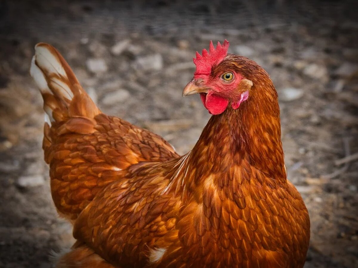 Hattiesburg poultry plant to partially close Thursday night
