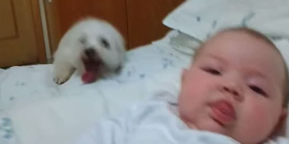 VIDEO: Pup tries desperately to see newborn baby