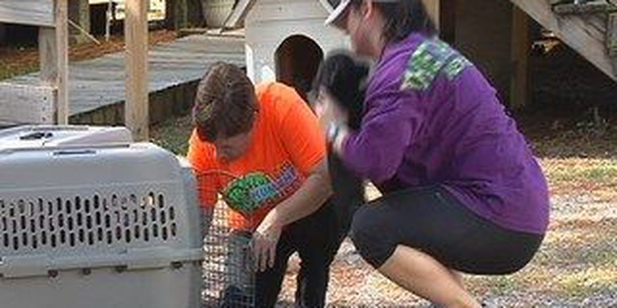 Hub City Humane Society teams with Pet Plus Natural to save lives