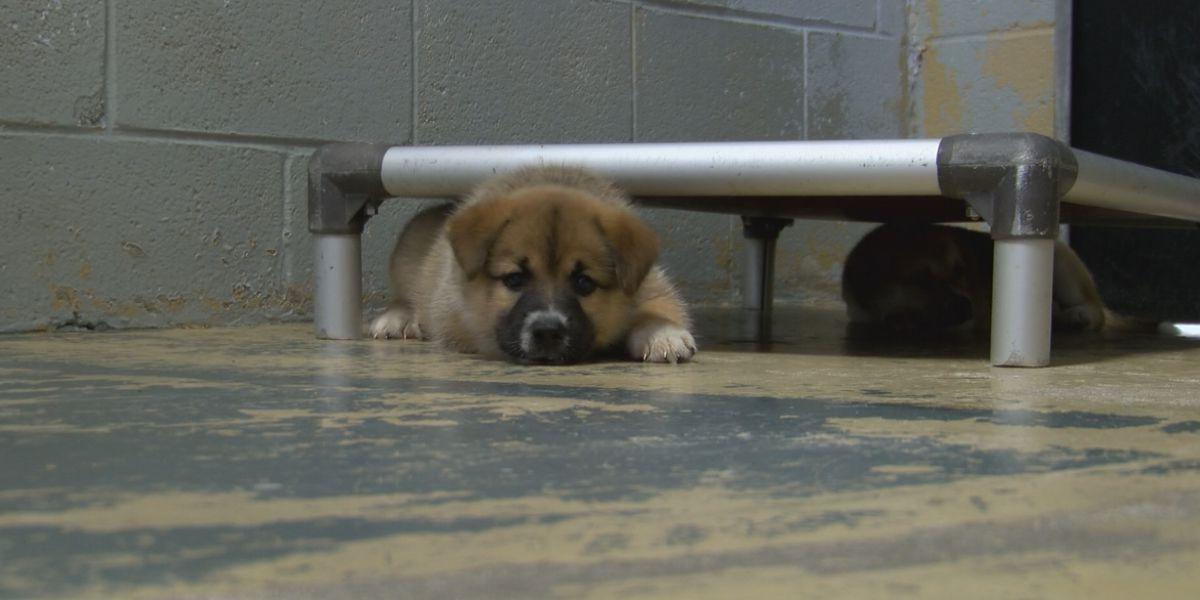 Jones County judge speaks on animal cruelty case under new law